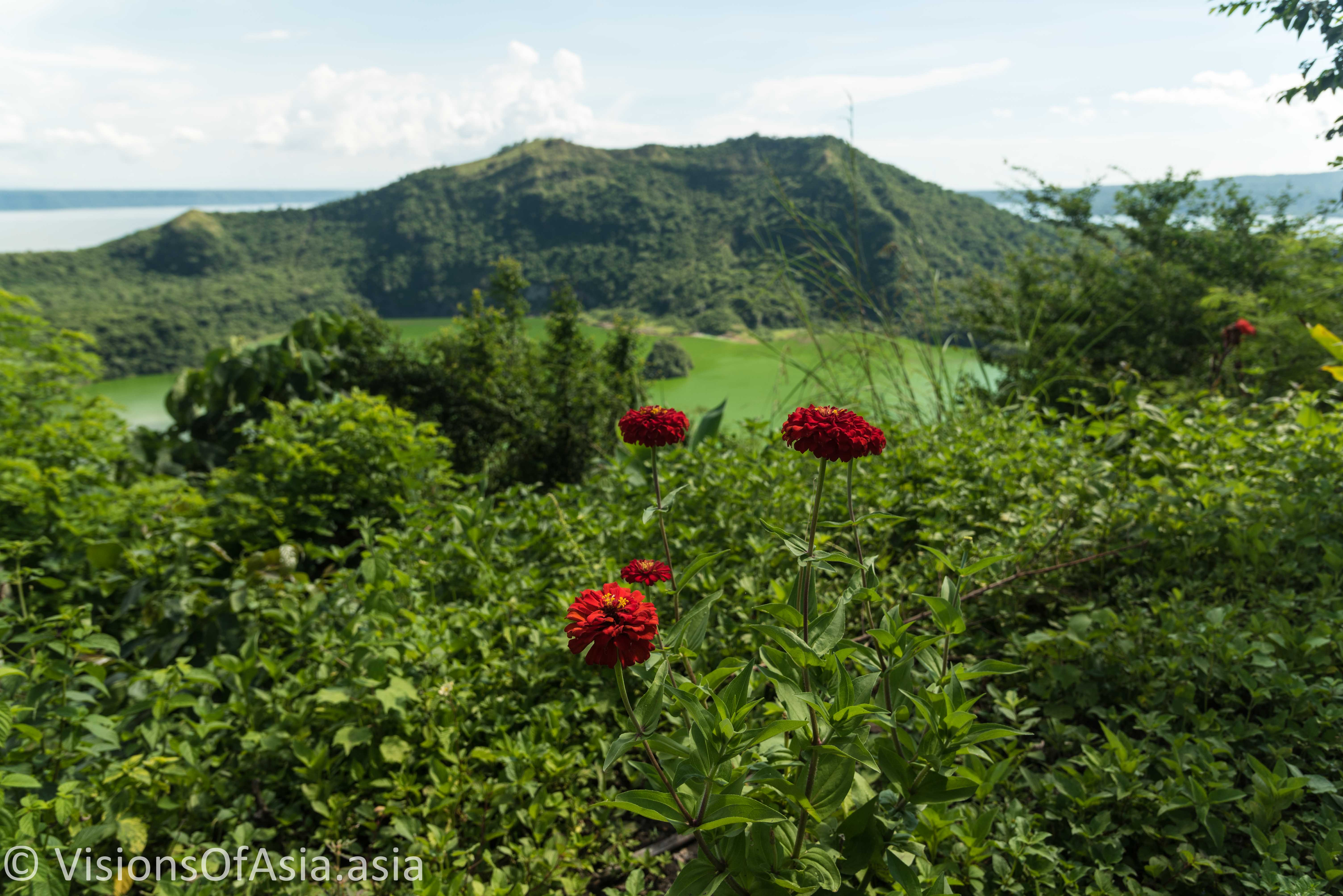 Red carnations on the crater